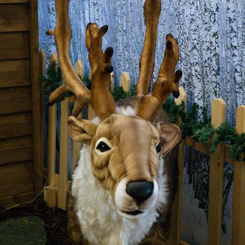 Reindeer, Codsall and Wergs Garden Centre (Merry Christmas)