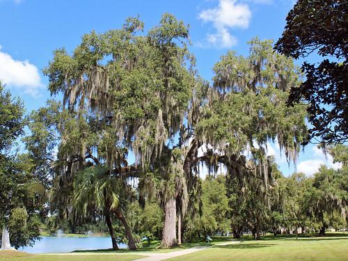 landscape scenery park trees liveoak spanishmoss ocala florida unitedstates