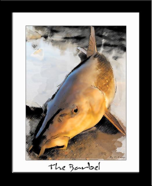 le poisson d'Or.
