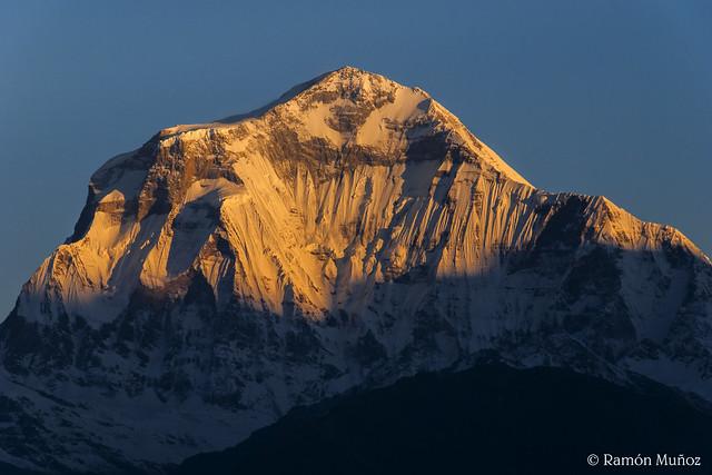 DSC1012 Amanecer sobre el Dhaulagiri I, 8.167 m., Himalaya de Nepal