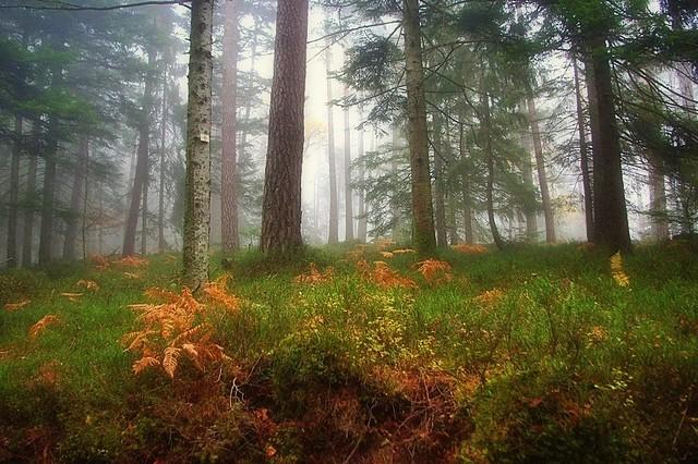 Paysage d'automne dans le brouillard -2-