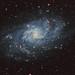 Messier 33 Triangulum Galaxy with HA by Tim Trentadue