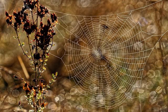 Morning web - Toile du matin