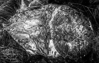 stump b+w green filter | by oook