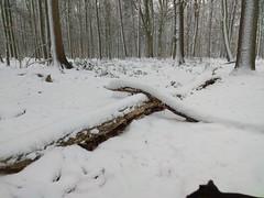 1. Februar 2019 - 9:37 - Winterspaziergang durch Roxel am 1. Februar 2019