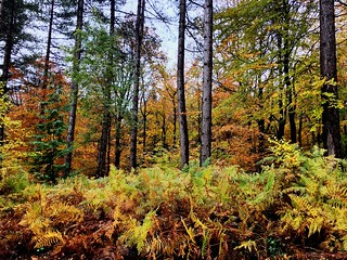 Wyre Forest in autumn colours.