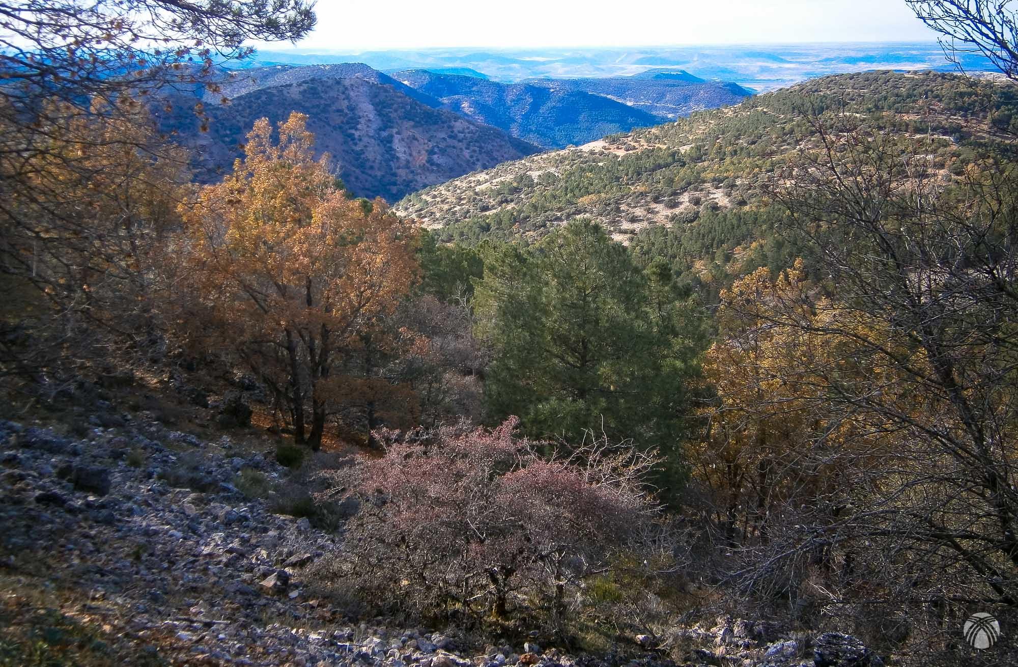 Bosque de alta montaña