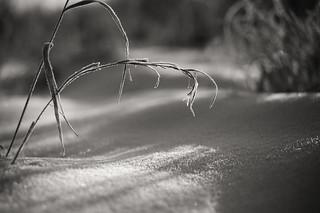 DSC06998 | by Angler61