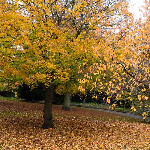 Autumn colours, Nottingham Arboretum