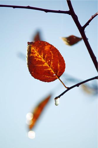 Осень   by ArtCouple