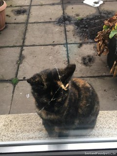 [Updated] Mon, Dec 10th, 2018 Found Female Cat - The Local Area, Terenure, Dublin