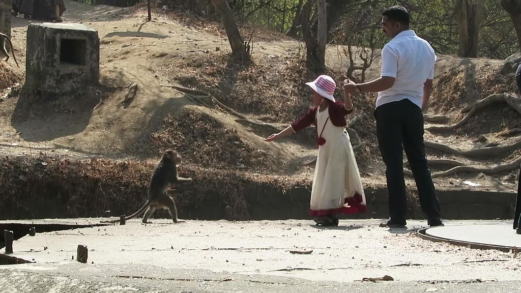 Girl feeds monkey
