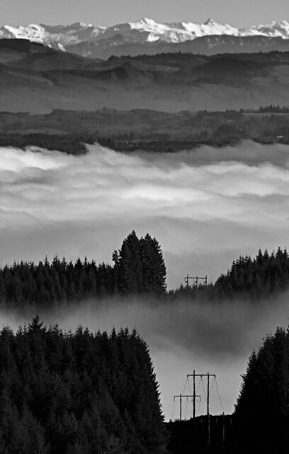 Winter Fog - Pacific Northwest