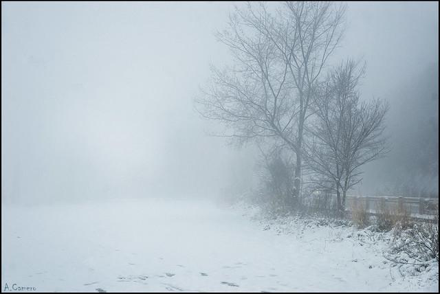 Paisaje en la niebla