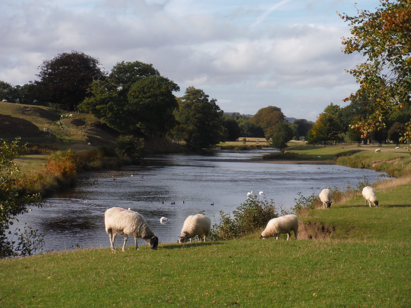 River Derwent, Chatsworth Estate SWC Walk 322 - Grindleford Circular (via Chatsworth House)