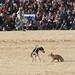 Festival International du Sahara: berberský pes sluga a lov na pouštní lišku, foto: Petr Nejedlý