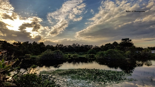 sunset over wakodahatchee wetlands