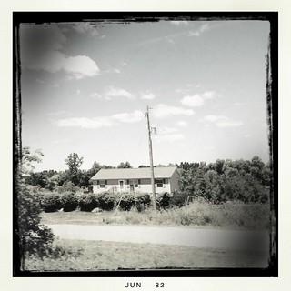 Tree farm | by dschirf