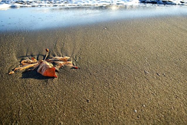 La foglia marina - The marine leaf