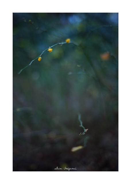 2019/1/5 - 8/18 photo by shin ikegami. - SONY ILCE‑7M2 / Carl Zeiss C Sonnar T* 1.5/50 ZM