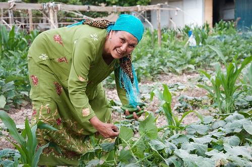 Farmer managing her kitchen garden in rural Tajikistan.