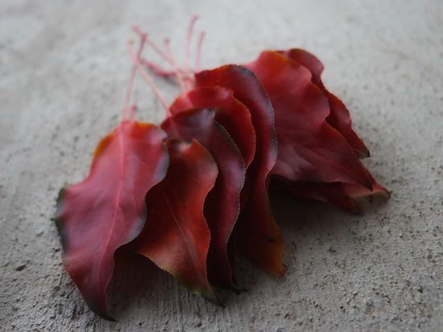 Autumn Bleeds