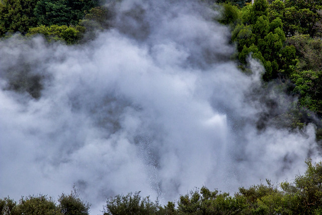 Everywhere you look another geyser, Te Puia, Rotoura, NZ