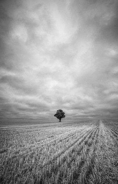 In a field of one