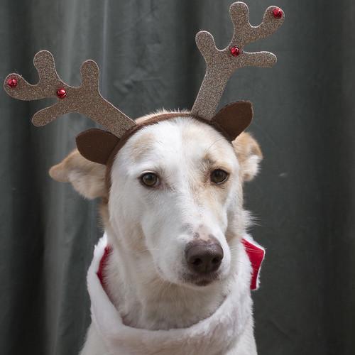 November innebär att förbereda julfoton   by bjorn_berggren