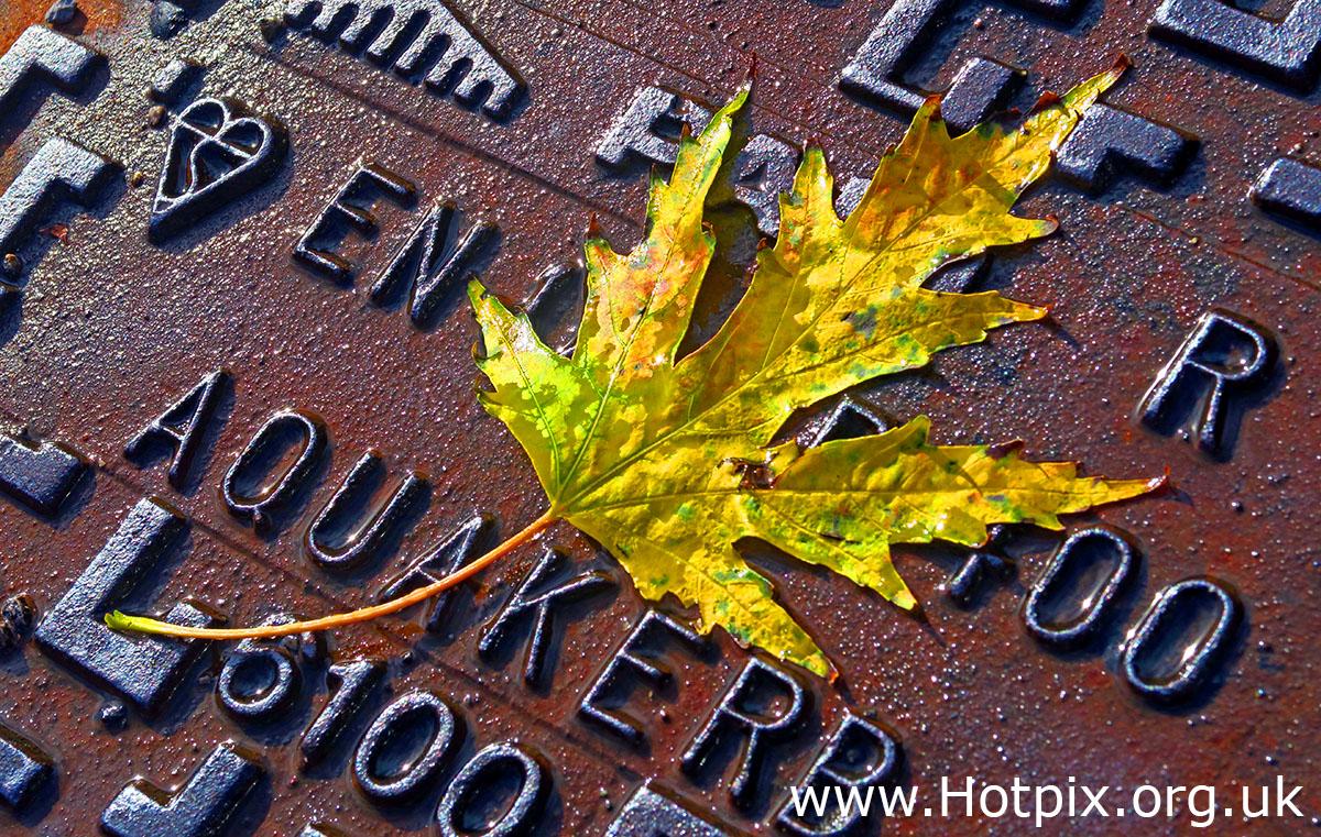 leaf,leaves,autumn,September,October,GoTonySmith,HotpixUK,Hotpix,Tony Smith,HousingITguy,365,Project365,2nd 365,HotpixUK365,Tone Smith