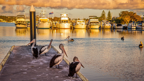 red pelican boats sunset jetty