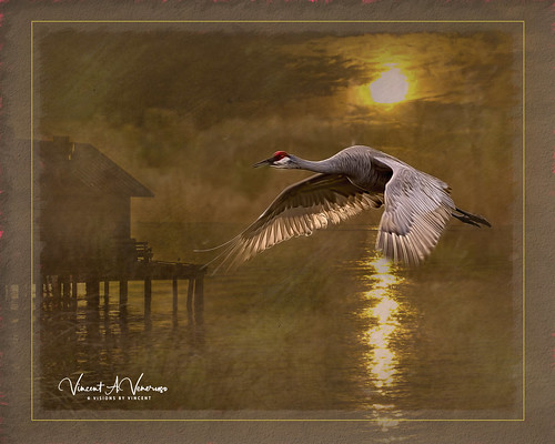birds texture topaz sandhill sunrise fantasticnature comosite