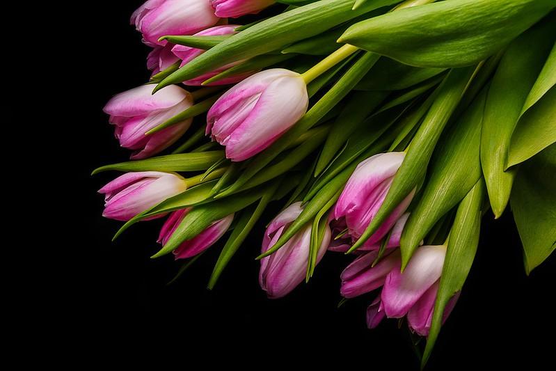 Обои цветы, букет, тюльпаны, розовые, fresh, pink, flowers, beautiful, romantic, tulips, spring картинки на рабочий стол, раздел цветы - скачать