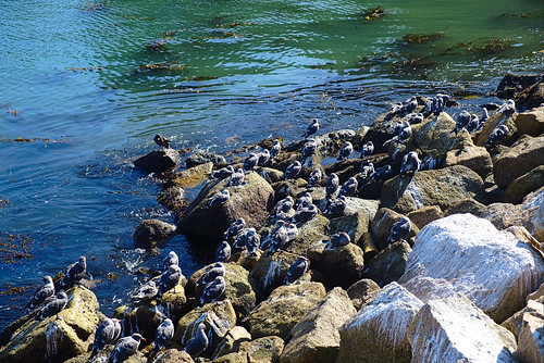 Sheltering birds, Cannery Point, Point Lobos | by aenigmatēs