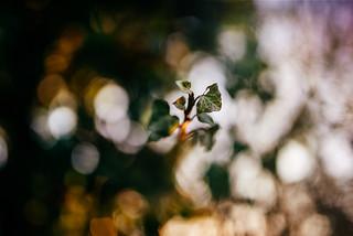 Aus dem Nichts | by Christina Wieck / Zweitliebefotografie