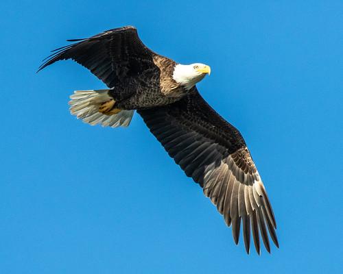 florida bird flight bif nature wildlife outdoor