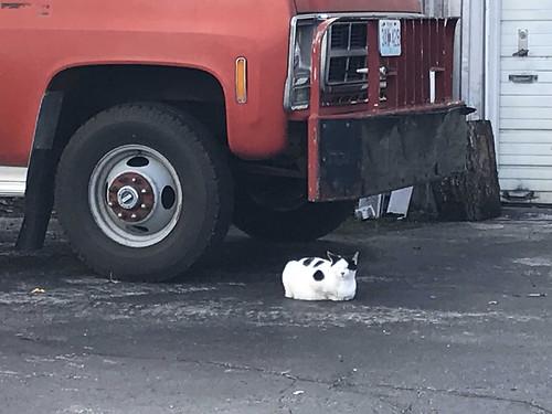 marionville missouri cat truck gasstation
