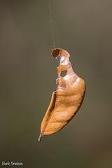 Leaf on a Web
