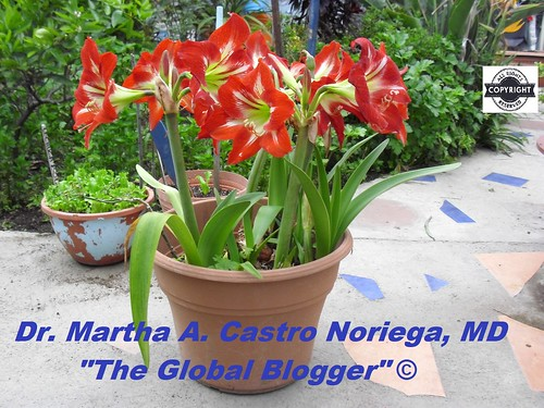 FlowersRed | by Dr Martha Castro MD