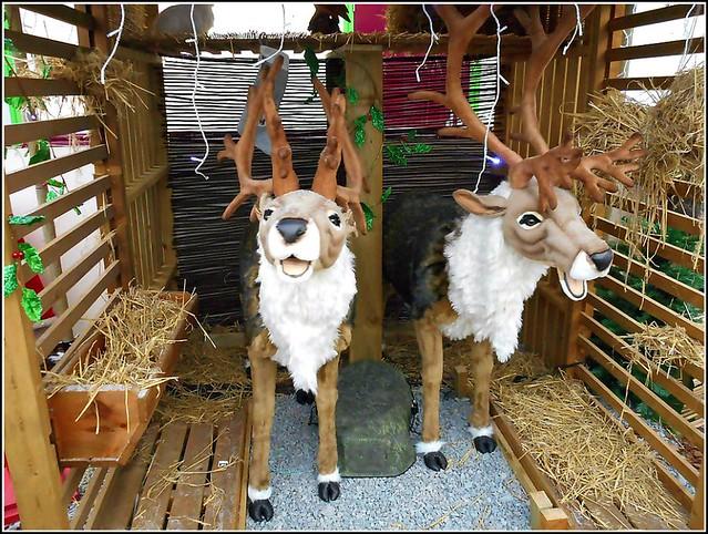 Musical Deer ..