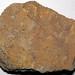 Sandstone (Allensville Member, Logan Formation, Lower Mississippian; Sugar Loaf Hill, Granville, Ohio, USA) 1