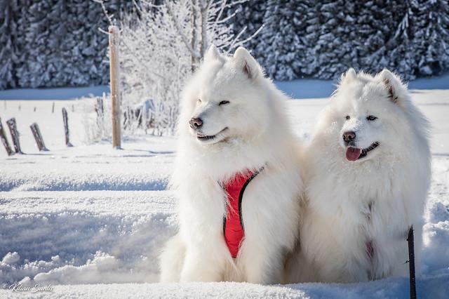 Blizzard et Neige posent