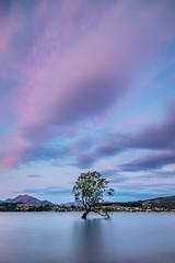 The Wanaka Tree-15