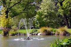 Queenstown Gardens_2018 10 31_3652