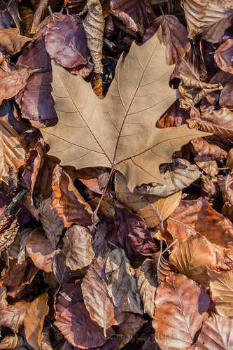 Leaf Litter | by ammonyte