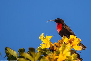 Lake_Naivasha_Kenya_sep18_11_sunbird | by Valentin Groza