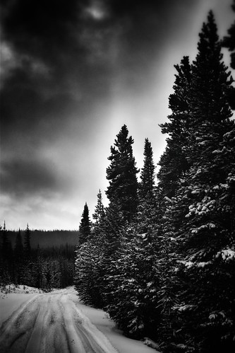 colorado blackandwhite landscape scenery snow winter trees forest rooseveltnationalforest