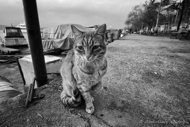 Cat 77
