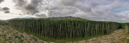 kauai forest poipu canon earth green