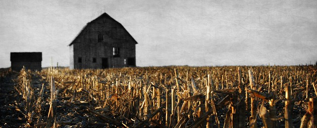 barn in the corn